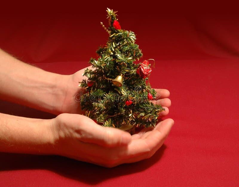 Download μικροσκοπικό δέντρο Χριστουγέννων Στοκ Εικόνα - εικόνα από χέρια, μικροσκοπικός: 50497