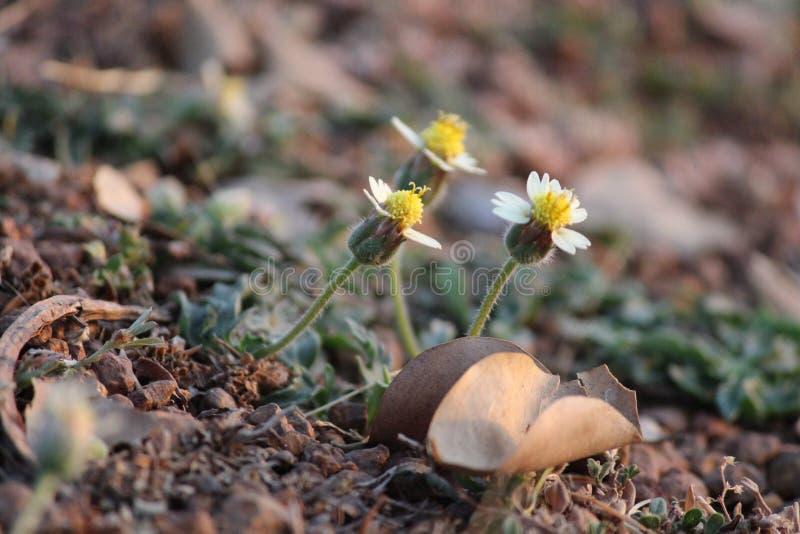 Μικροσκοπικό λουλούδι στοκ εικόνες με δικαίωμα ελεύθερης χρήσης