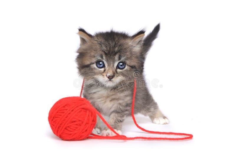 Μικροσκοπικό παιχνίδι γατακιών με την κόκκινη σφαίρα του νήματος στοκ εικόνα