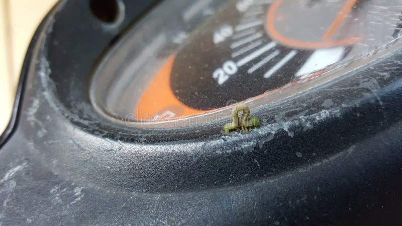 Μικροσκοπικό σκουλήκι στοκ φωτογραφίες