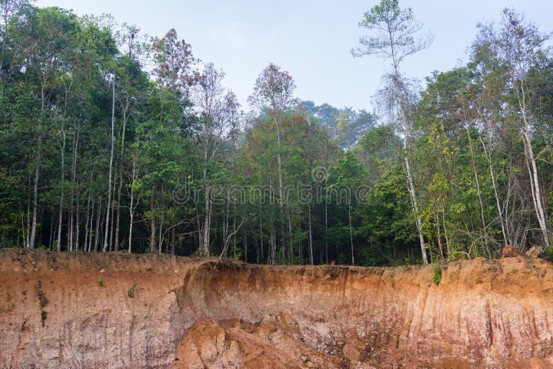 Μικρός απότομος βράχος στο δάσος που προκαλείται από την καθίζηση εδάφους στοκ εικόνες