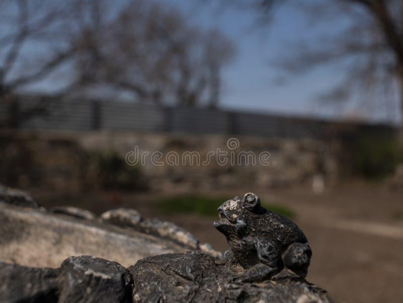 μικρός αριθμός πετρών βατράχων υπαίθριος στοκ φωτογραφία