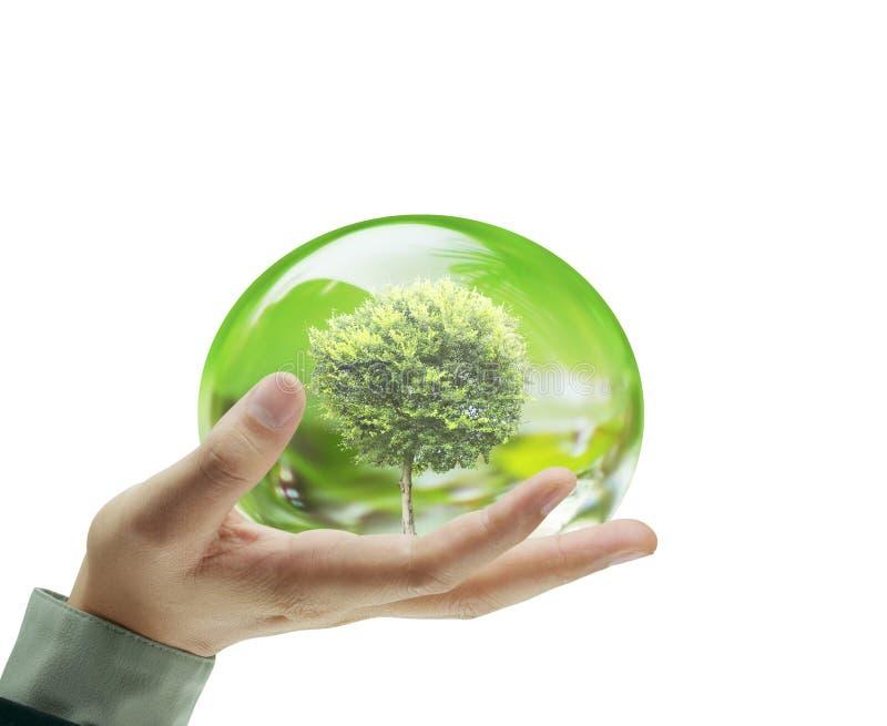 Μικρός επιχειρηματίας χεριών δέντρων διαθέσιμος στοκ εικόνες