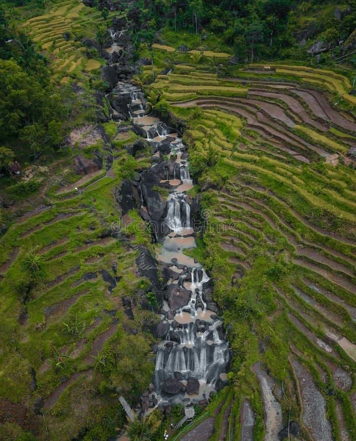 μικρός καταρράκτης στη μέση των τομέων ρυζιού στοκ φωτογραφία