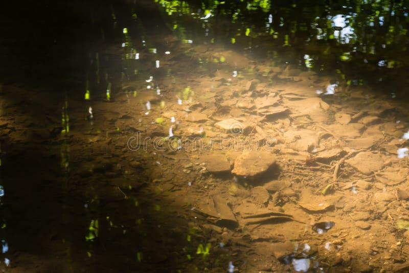 Μικρός κολπίσκος στη δασική κινηματογραφήσεων σε πρώτο πλάνο φύση θερινής ημέρας σύστασης δροσερή έξω στοκ εικόνες