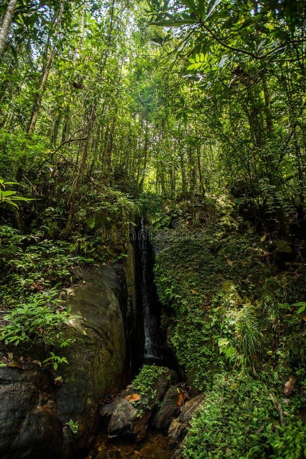 Μικρός κρυμμένος καταρράκτης στο δάσος στοκ φωτογραφία με δικαίωμα ελεύθερης χρήσης