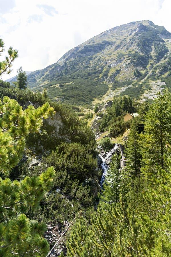 μικρός ποταμός στο βουνό Pirin, Βουλγαρία στοκ εικόνες