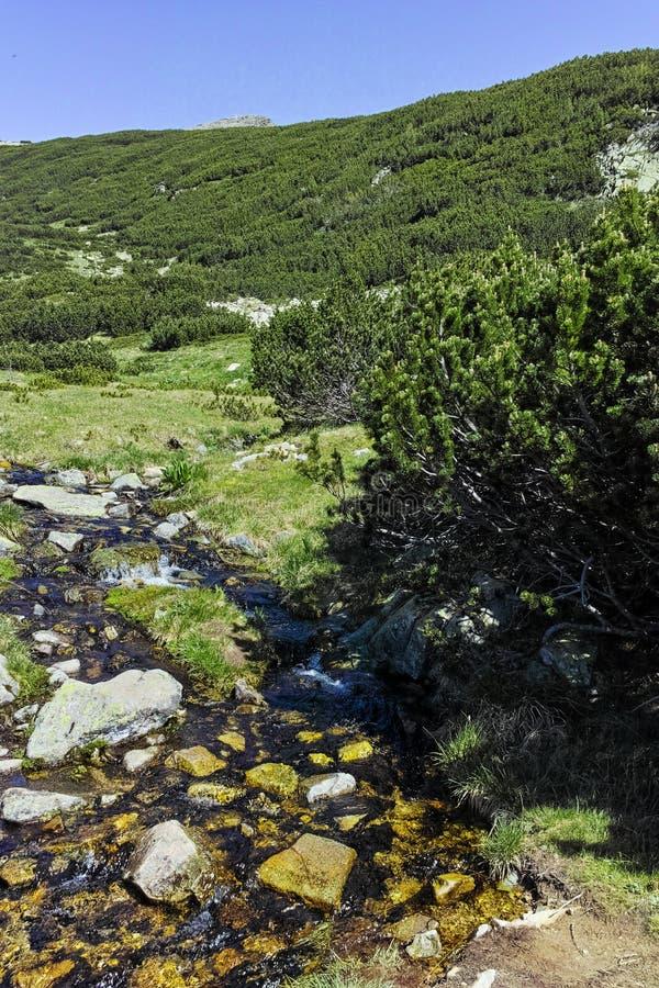 Μικρός ποταμός στο βουνό Pirin στοκ φωτογραφία με δικαίωμα ελεύθερης χρήσης