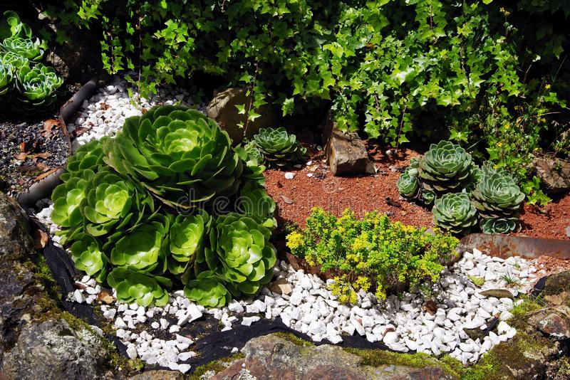 Μικρός υπαίθριος succulent κήπος στο πάρκο ανεξαρτησίας της Μπογκοτά στοκ φωτογραφία με δικαίωμα ελεύθερης χρήσης