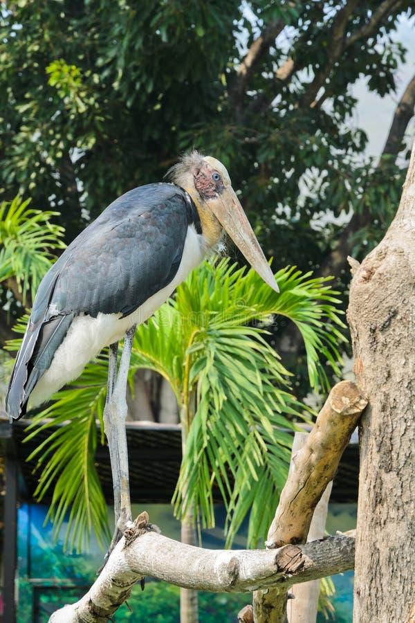 Μικρότερο πουλί υπασπιστών στοκ εικόνα με δικαίωμα ελεύθερης χρήσης