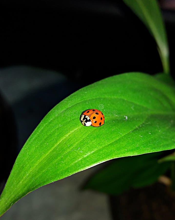 Μικρό έντομο σε ένα φύλλο στοκ εικόνες