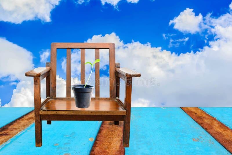Μικρό δέντρο στην έδρα με το μπλε ουρανό και το μπλε ξύλινο υπόβαθρο πατωμάτων στοκ φωτογραφία με δικαίωμα ελεύθερης χρήσης