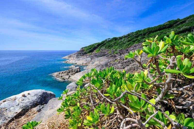 Μικρό δέντρο στο σημείο άποψης νησιών Tachai στοκ φωτογραφία