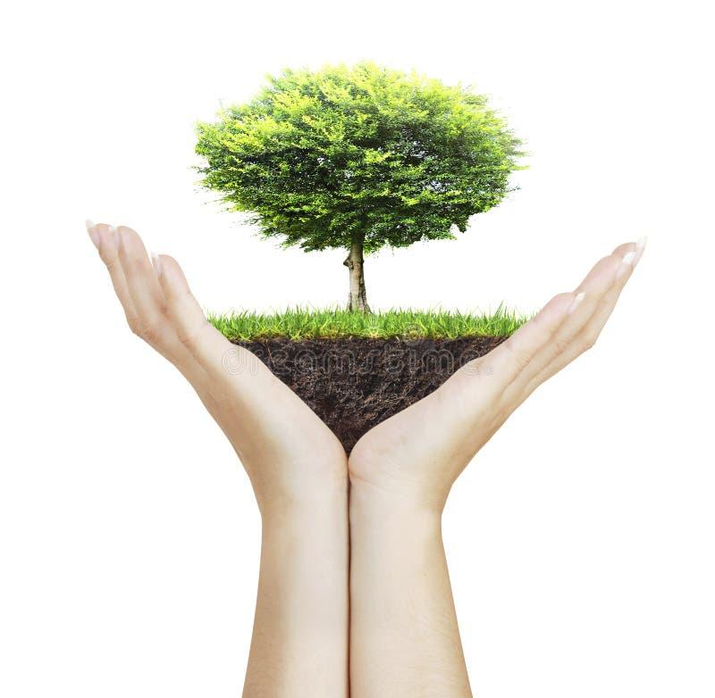 Μικρό δέντρο υπό εξέταση στοκ εικόνα με δικαίωμα ελεύθερης χρήσης