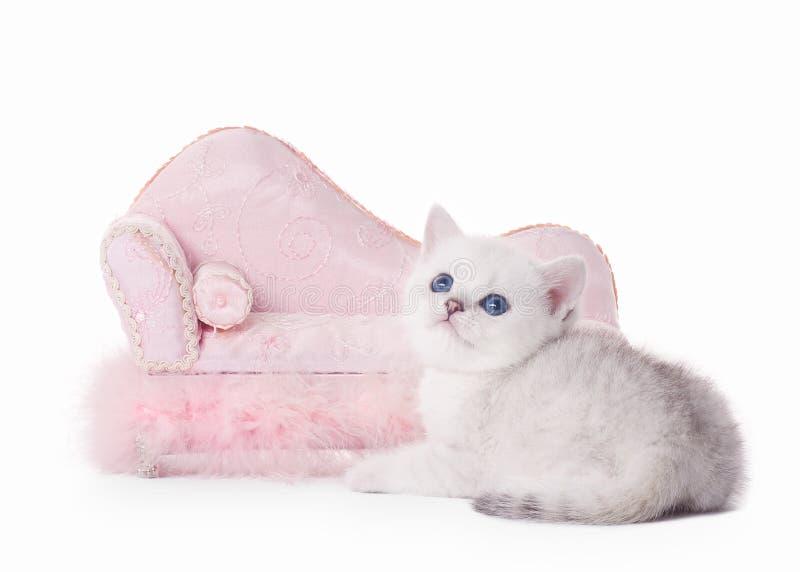 Μικρό ασημένιο βρετανικό γατάκι με το ρόδινο ντιβάνι στοκ φωτογραφία
