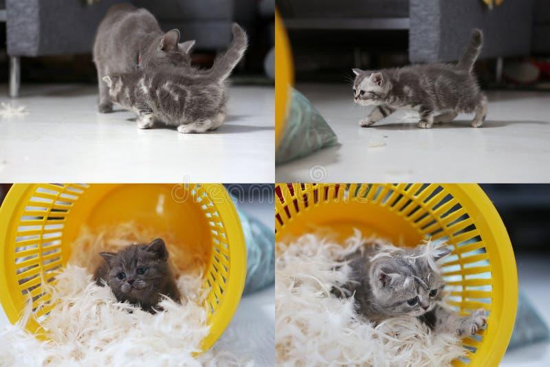 Μικρό γατάκι μεταξύ των άσπρων φτερών, multicam, οθόνη πλέγματος 2x2 στοκ εικόνες