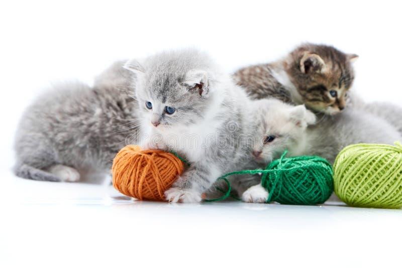 Μικρό γκρίζο χνουδωτό λατρευτό παιχνίδι γατακιών με την πορτοκαλιά σφαίρα μαλλιού ενώ άλλα γατάκια παίζουν με τις πράσινες σφαίρε στοκ εικόνα