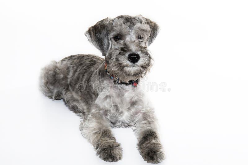 Μικρό γλυκό σκυλί στοκ εικόνες