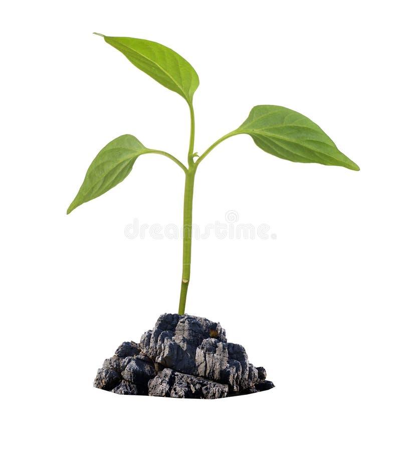 μικρό λευκό φυτών στοκ φωτογραφία