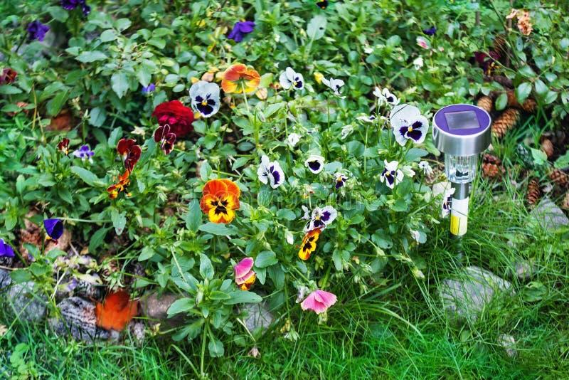 Μικρό ηλιακό φως κήπων με τα pansy λουλούδια στοκ εικόνα με δικαίωμα ελεύθερης χρήσης
