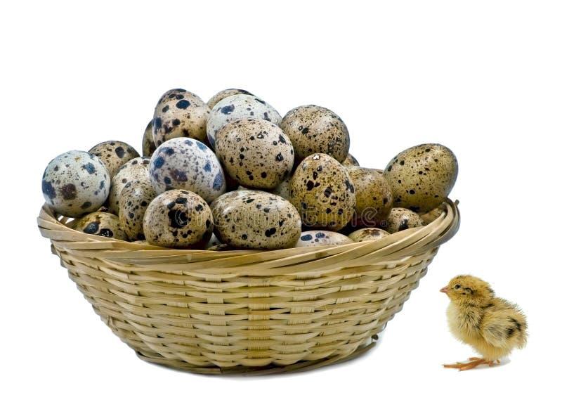 Μικρό καλάθι με τα αυγά ορτυκιών και τα ορτύκια νεοσσών στοκ εικόνα με δικαίωμα ελεύθερης χρήσης