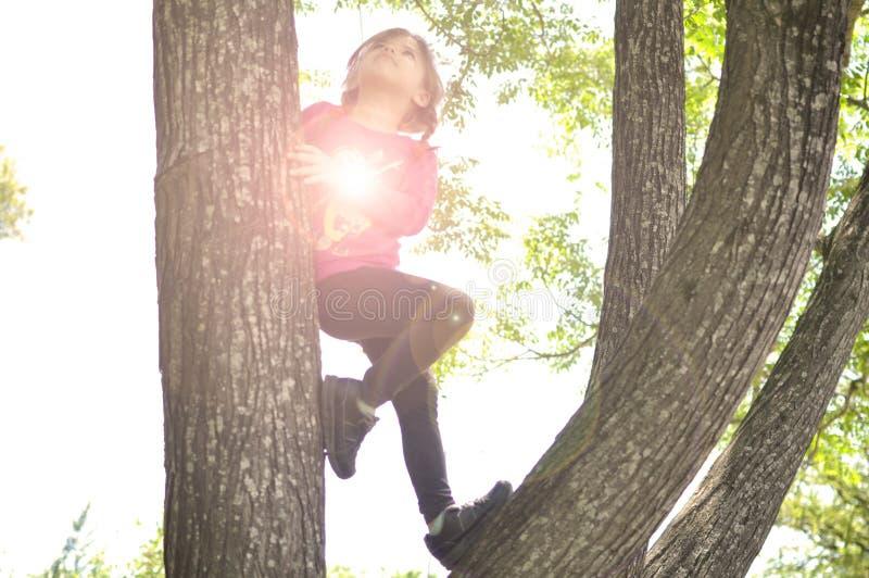 Μικρό κορίτσι που αναρριχείται στο δέντρο στο ηλιοβασίλεμα στοκ φωτογραφίες