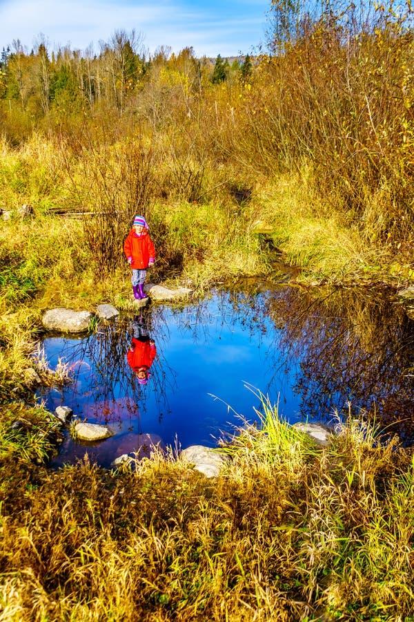 Μικρό κορίτσι που εξετάζει την αντανάκλασή της στο νερό των υγρότοπων κολπίσκου της Silverdale, ενός έλους και ενός έλους μια συμ στοκ εικόνα