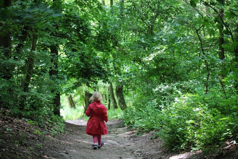 Μικρό κορίτσι που περπατά μέσω του δάσους στοκ εικόνες