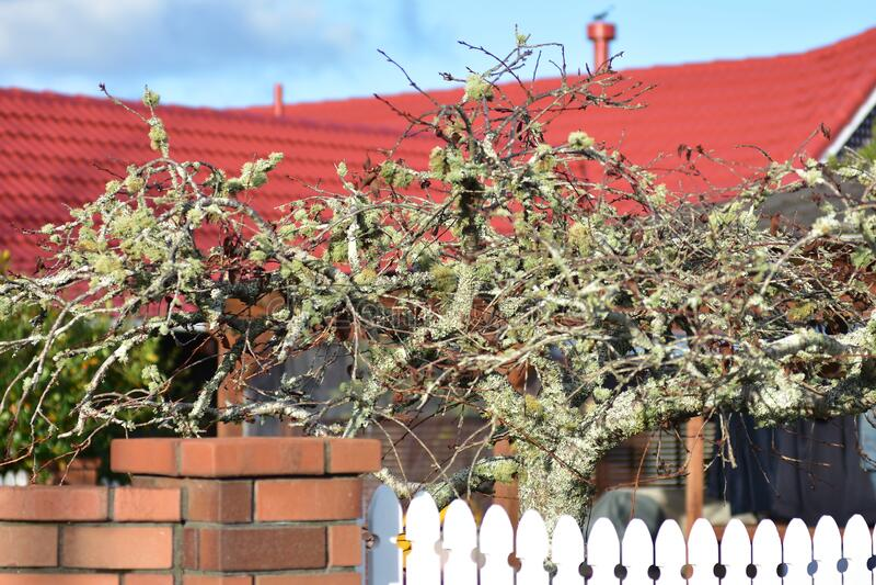 Μικρό, μοδάτο δέντρο μπροστά από το σπίτι στοκ εικόνα