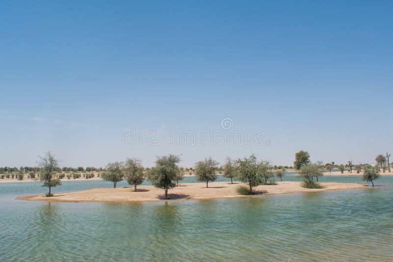 Μικρό νησί στην τεχνητή λίμνη στην όαση στην έρημο που περιβάλλεται από τα δέντρα και τους Μπους στοκ εικόνα
