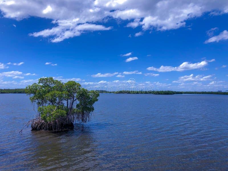 Μικρό νησί στη λίμνη στοκ εικόνα με δικαίωμα ελεύθερης χρήσης