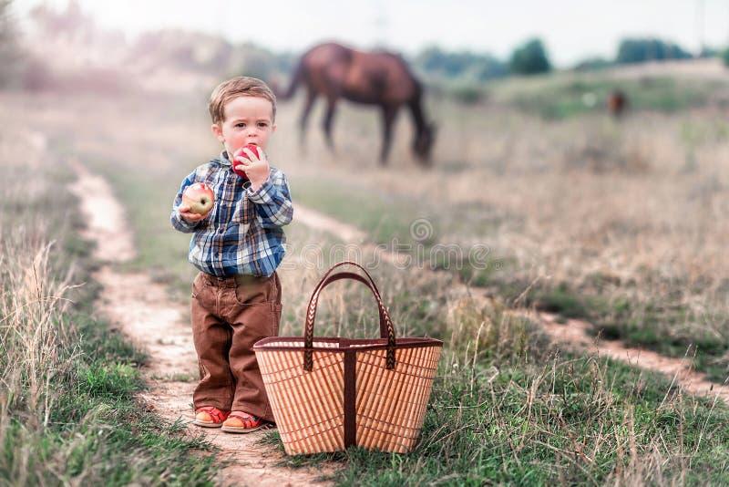Μικρό παιδί με ένα καλάθι των μήλων και ένα άλογο στο υπόβαθρο στοκ φωτογραφίες