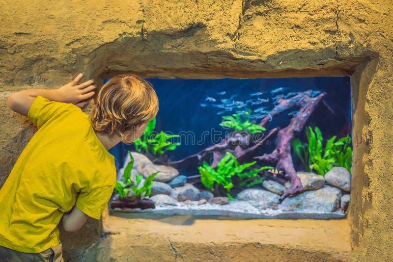 Μικρό παιδί, παιδί που προσέχει το κοπάδι των ψαριών που κολυμπούν στο oceanarium, παιδιά που απολαμβάνει την υποβρύχια ζωή στο ε στοκ φωτογραφία με δικαίωμα ελεύθερης χρήσης