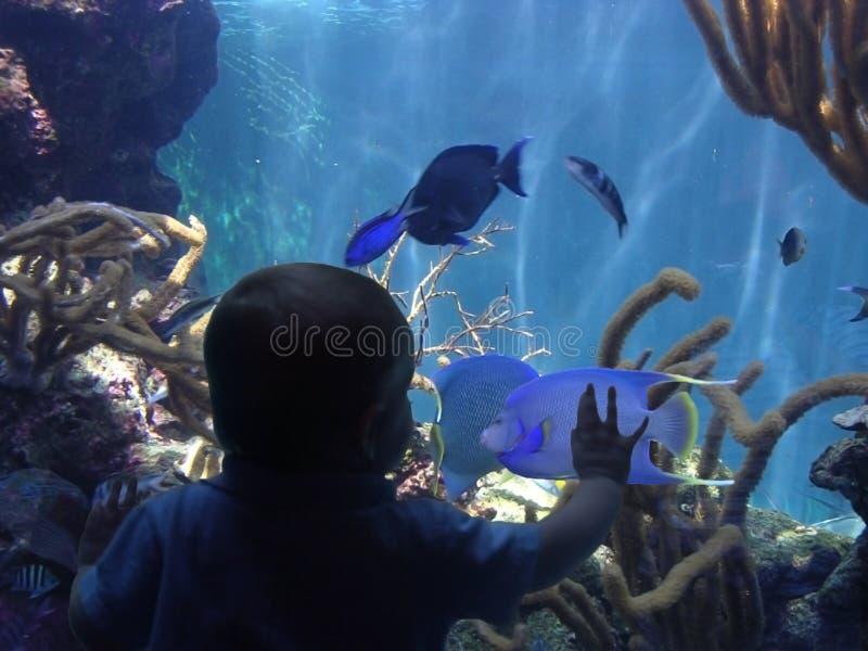μικρό παιδί ψαριών στοκ εικόνες