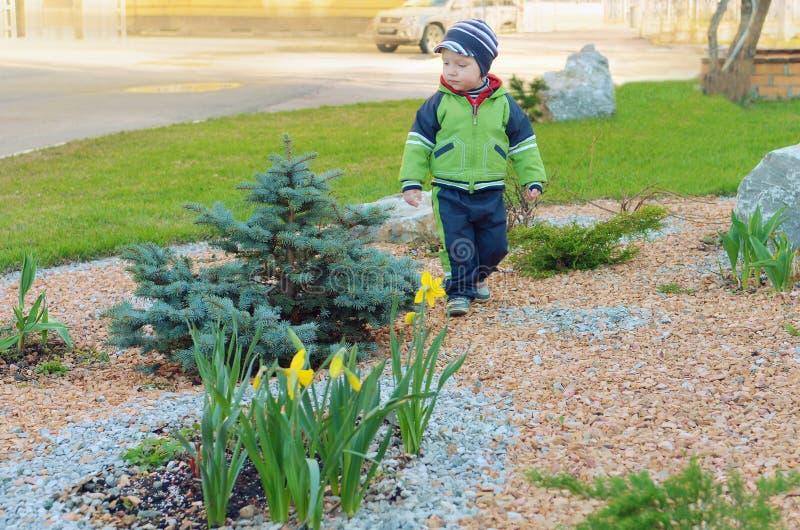 Μικρό παιδί των μπλε ερυθρελατών και daffodils στοκ εικόνες