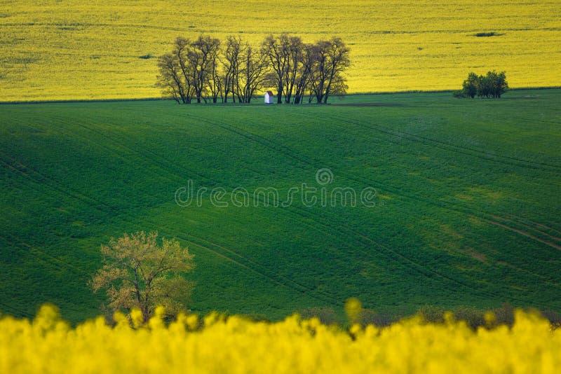 Μικρό παρεκκλησι σε μια απόσταση που περιβάλλεται από τα δέντρα και τους τομείς Κίτρινη άνθιση συναπόσπορων και πράσινος τομέας τ στοκ εικόνα