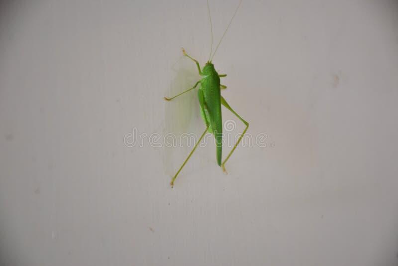 Μικρό πράσινο έντομο στον τοίχο στοκ φωτογραφία με δικαίωμα ελεύθερης χρήσης