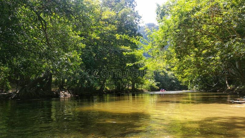 Μικρό ρεύμα κατά μήκος του δάσους με την κωπηλασία σε κανό στοκ φωτογραφία με δικαίωμα ελεύθερης χρήσης