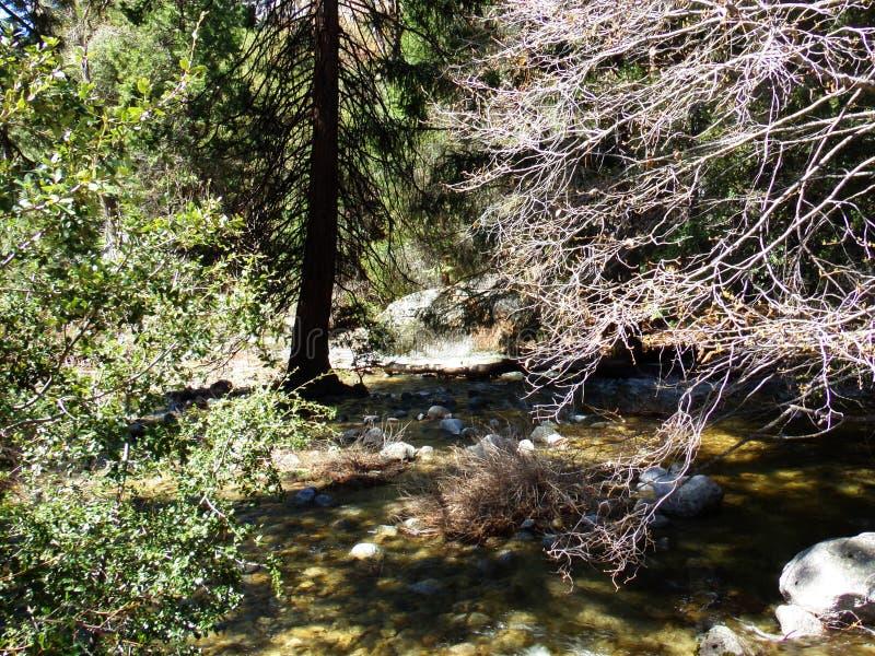 Μικρό ρεύμα, κολπίσκος - εθνικό πάρκο Yosemite ΗΠΑ στοκ φωτογραφία με δικαίωμα ελεύθερης χρήσης
