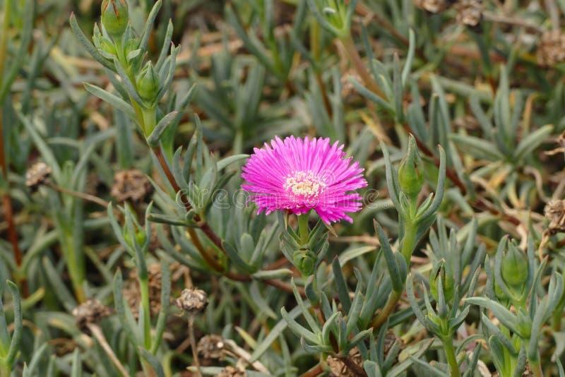 Μικρό ρόδινο λουλούδι της Nic στοκ εικόνες με δικαίωμα ελεύθερης χρήσης
