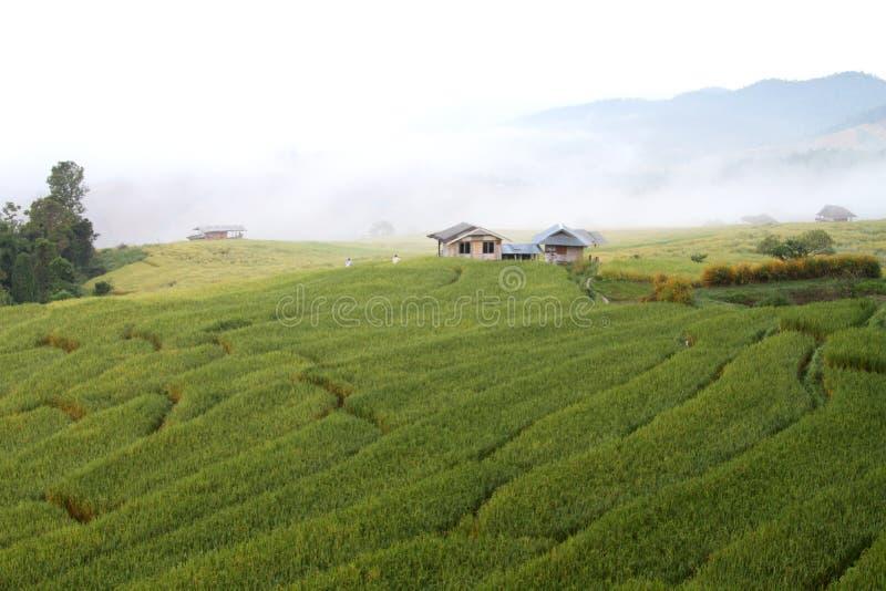 Μικρό σπίτι σε χωράφια στοκ φωτογραφία με δικαίωμα ελεύθερης χρήσης