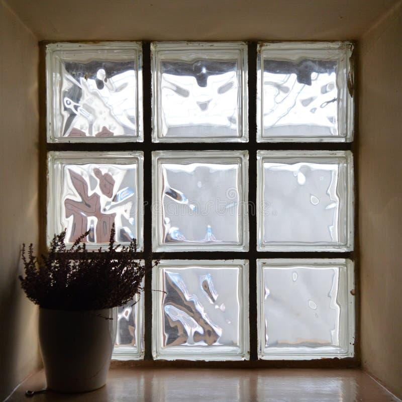 Μικρό τετραγωνικό παράθυρο με τις εγκαταστάσεις σε ένα δοχείο στοκ εικόνα με δικαίωμα ελεύθερης χρήσης