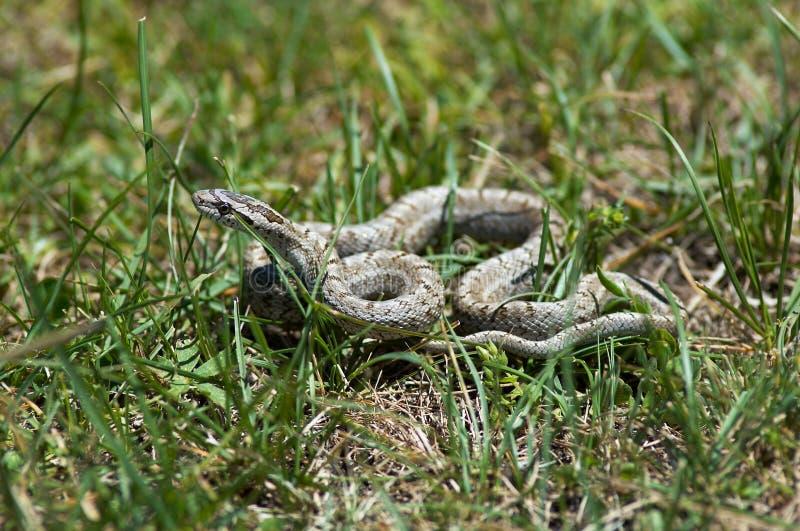 μικρό φίδι στοκ εικόνα