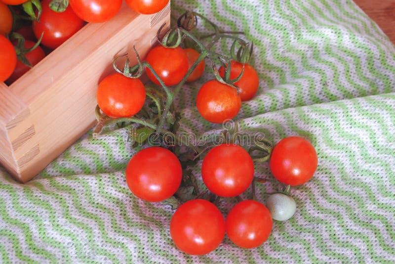 Μικρό χύσιμο ντοματών από το ξύλινο κιβώτιο r στοκ εικόνες