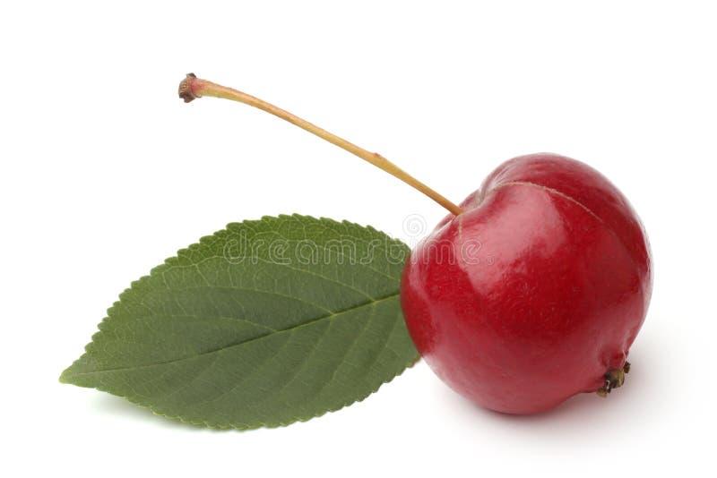 Μικρό ranetka μήλων με το πράσινο φύλλο στοκ φωτογραφία με δικαίωμα ελεύθερης χρήσης