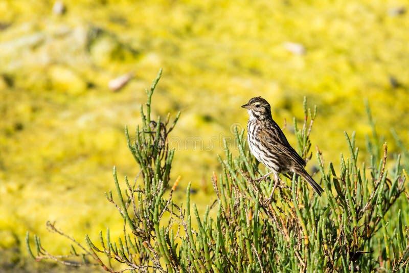 Μικρό Songbird που σκαρφαλώνει σε έναν θάμνο κοντά σε ένα slimy έλος στοκ εικόνα με δικαίωμα ελεύθερης χρήσης