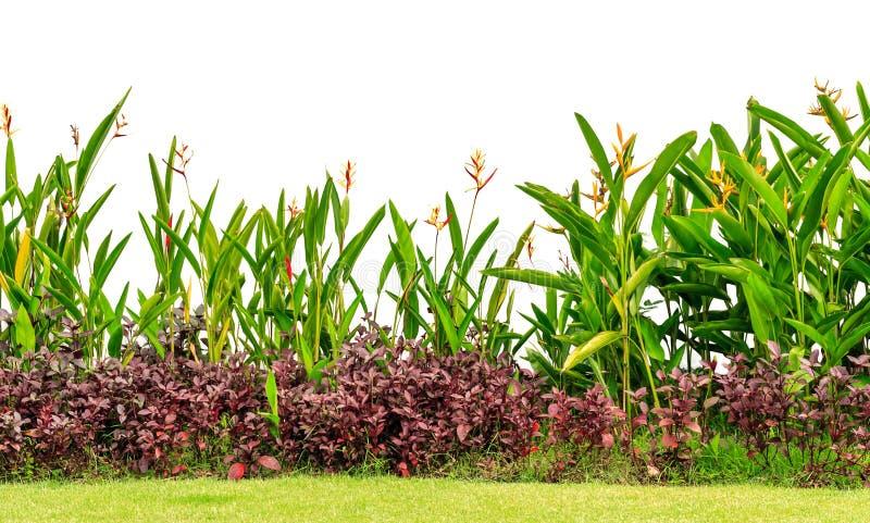 Μικτός κήπος στοκ φωτογραφία με δικαίωμα ελεύθερης χρήσης