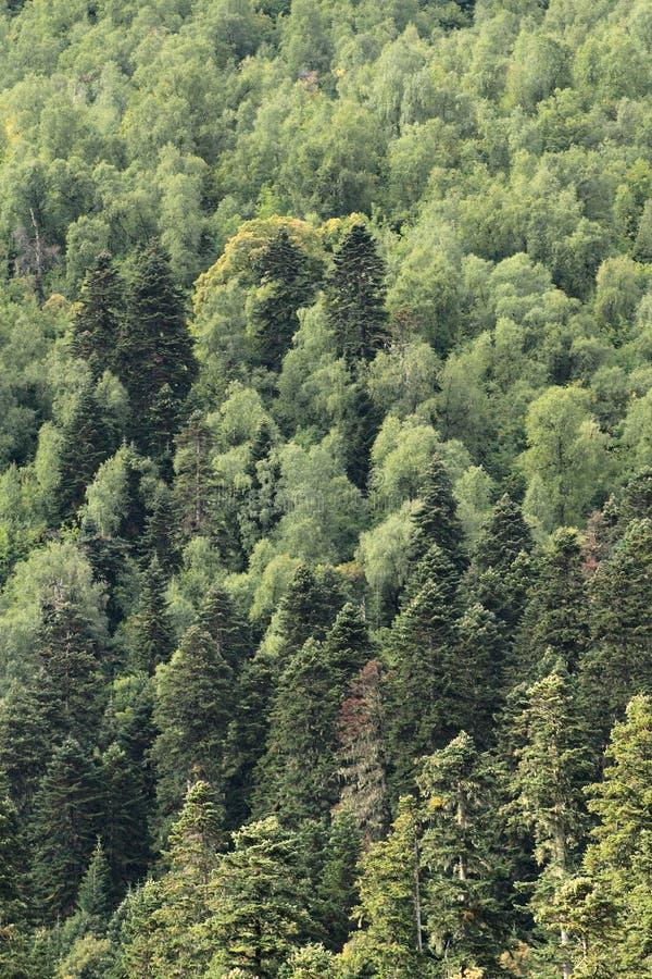 Μικτό δάσος στοκ εικόνες