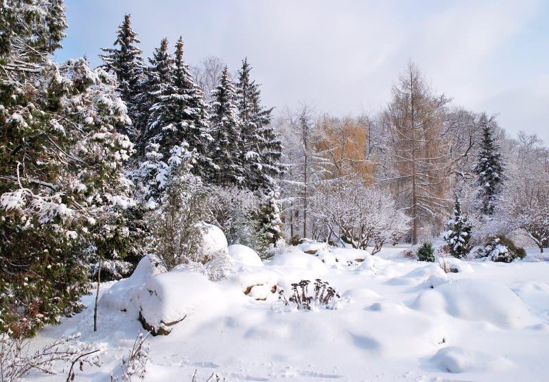 Μικτό δάσος στο χειμερινό χιόνι στοκ εικόνες