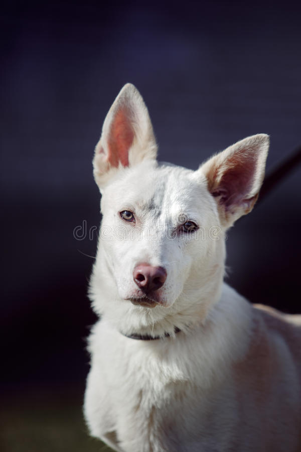 Μικτό σκυλί φυλής στη φύση στοκ φωτογραφία με δικαίωμα ελεύθερης χρήσης